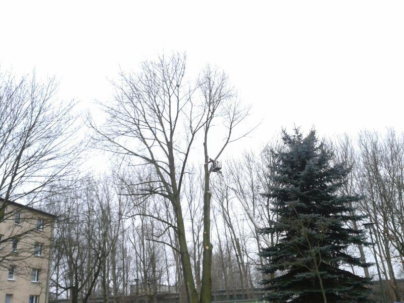 Klettergurt Für Baumfällung : Klettergurt für baumfällung: abtragen garten & landschaftsbau