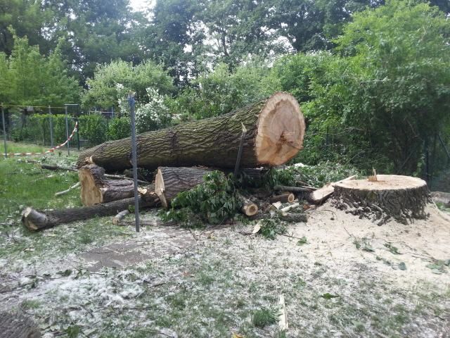 Klettergurt Baumfällung : Baumpflege sebastian körber baumfällung objektpflege