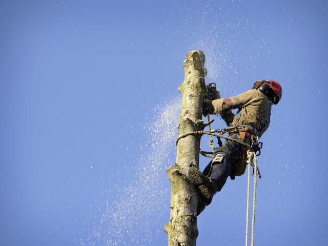 Klettergurt Baum : Baumpflege sebastian körber baumfällung objektpflege